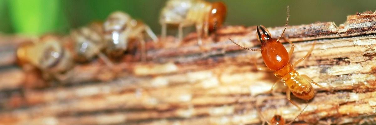 Termite Exterminators Fast Action Pest Control